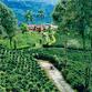Viajes a Colombia | Hacienda, Eje Cafetero