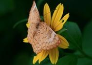 Mariposa sobre una flor en la selva del Parque Nacional de Tayrona, en el Caribe colombiano
