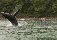 Colombia Turismo | Ballenas en Nuqui