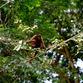 Viajes a Colombia | Mono en el PN Amacayacu, Amazonas