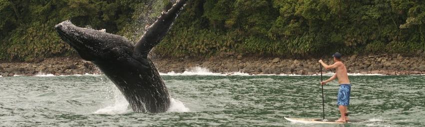 Ballenas en Nuqui