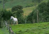 Paisaje con caballo en el Eje Cafetero