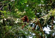 Mono entre los árboles del Parque Nacional Amacayacu